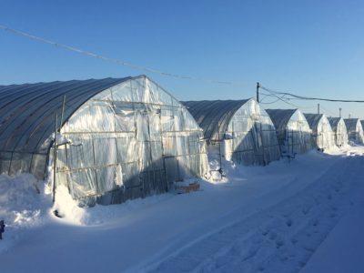 雪に埋もれるいちごハウス